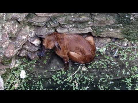 Heartwarming rescue of dog fallen in well - watch when she sees her rescuer