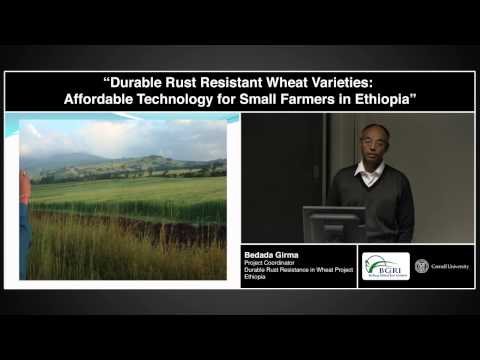 "Dr. Bedada Girma (EIAR) - ""Durable Rust Resistant Wheat Varieties for Small Farmers in Ethiopia"""