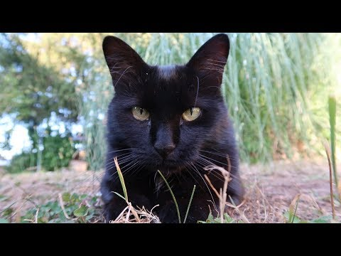Chats En Images (mes 4 Chats)