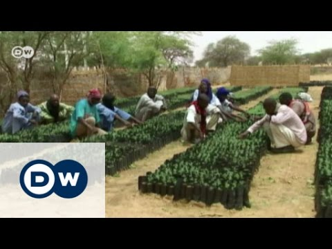 Building a wall to keep the desert out | Eco-at-Africa