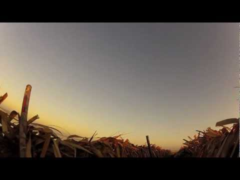 NE Arkansas Duck Hunt 2012 HD