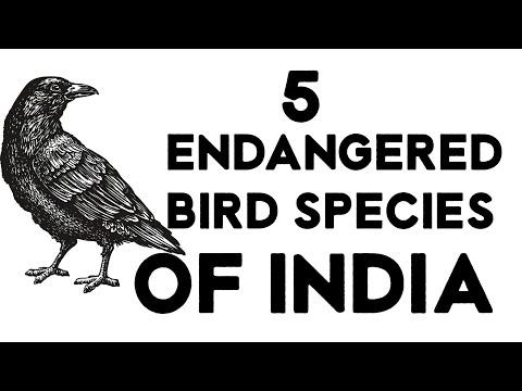 5 ENDANGERED BIRDS SPECIES IN INDIA