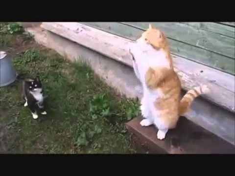 Pisici amuzante colectare amuzant de glume cu pisici și pisici