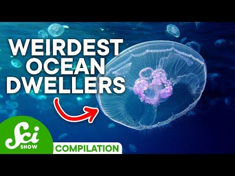 Bizarre Creatures of the Deep Sea   Compilation