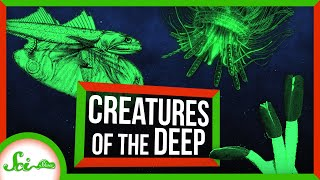 Bizarre Creatures of the Deep Sea | Compilation