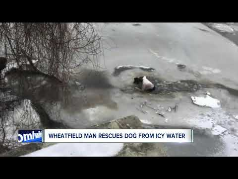 Wheatfield Man Rescues Dog From Icy Water
