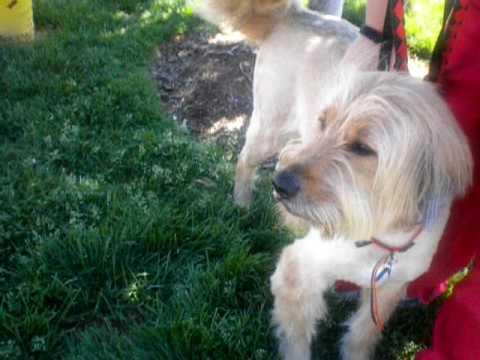 Yankee at the Humane Society of Missouri
