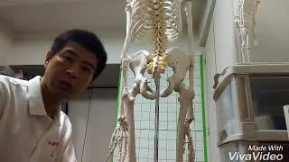 大腿骨近位部骨折後のリハビリ 外旋筋群について ⑩-1