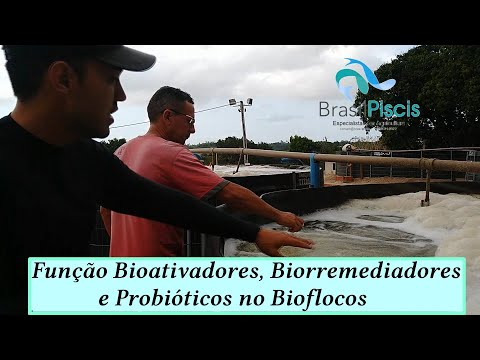 Bioativador, Biorremediador E Probiótico Em Bioflocos De Camarão