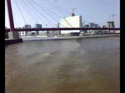 Rotterdam Swim