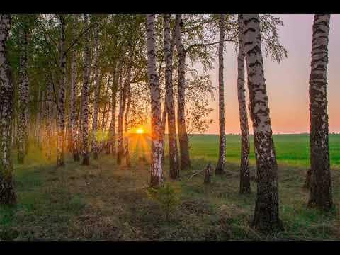 Мир очарован соловьиной трелью   Автор Олег Черный  Поёт автор музыки Евгений Никитин
