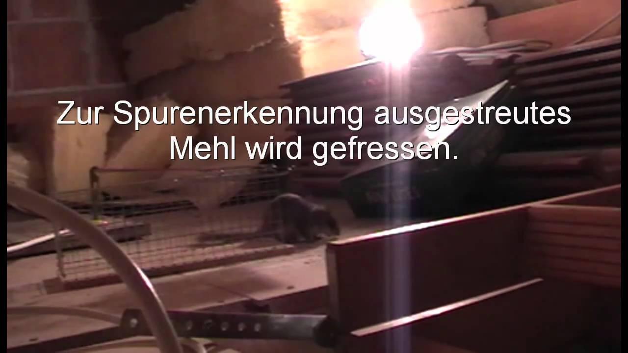 besuch auf dem dachboden - youtube