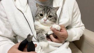 猫が寛いでるときに爪切りを出したらこうなった…笑