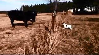 犬が電気フェンスで感電します。 【関連動画】 首輪でビリビリ感電して...