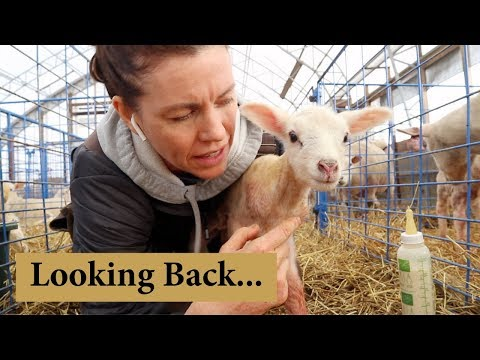 What I Wish I Knew Before Starting a Sheep Farm:  Vlog 126