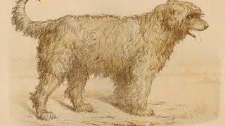Русская - Южнорусская овчарка 1880-2015