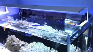 MicMol - Newest Aqua Air LED Aquarium Lighting