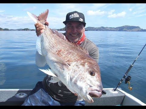 Live Baiting For Big Reds - Bay Of Islands