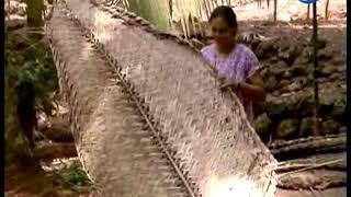 Krishidarshan - 12 June 2018 - नारळ लागवड