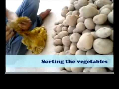 How To Start Vegetable Delivery Business