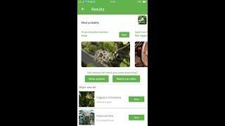 PlantSnap identifies a Hoya (Hoya kanyakumariana)