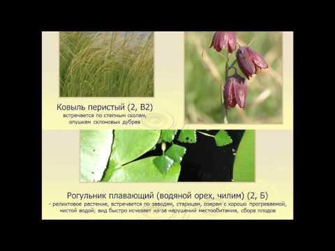 Редкие растения. Красная книга Керженского запведник