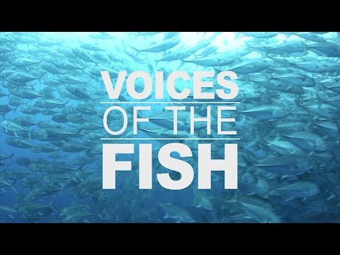Voices Of The Fish: Strengthening Our Knowledge - 2 Of 4