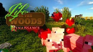 🔨 Minecraft 06 | Saumäßiger Schweinetransport | Back to Nature | Life in the Woods Gameplay thumbnail