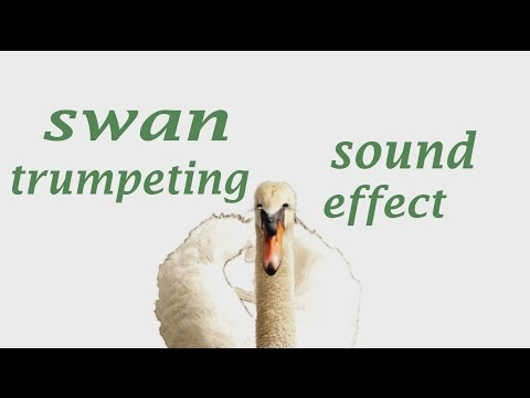 swan sounds mp3