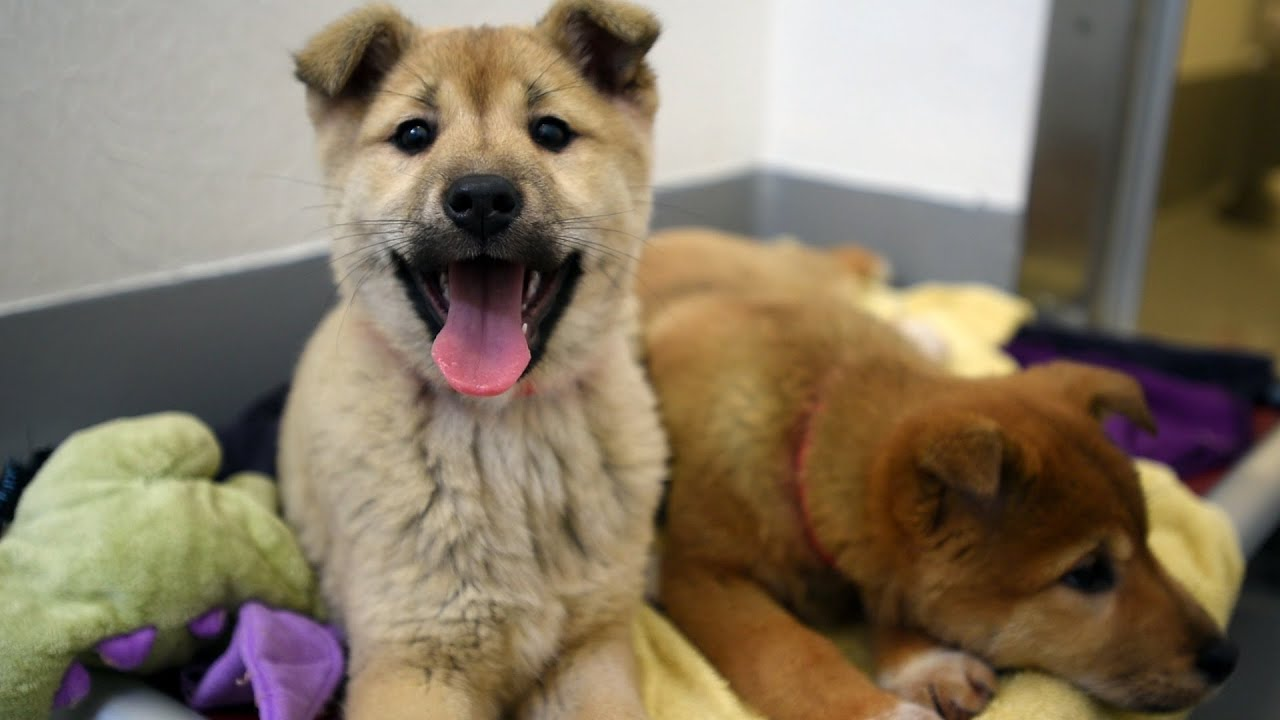 Humane Society South Korea Dog Rescue