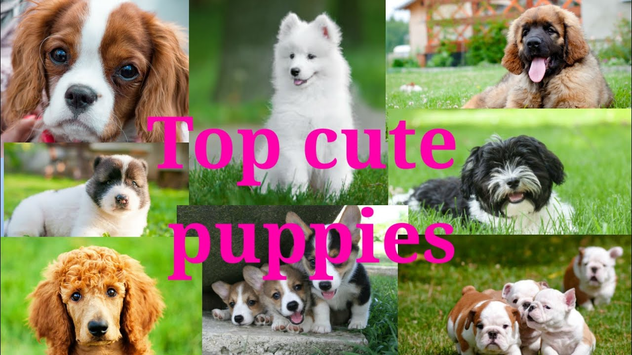 top cute dogs | cute puppies| best collection | PT Fantastic 10