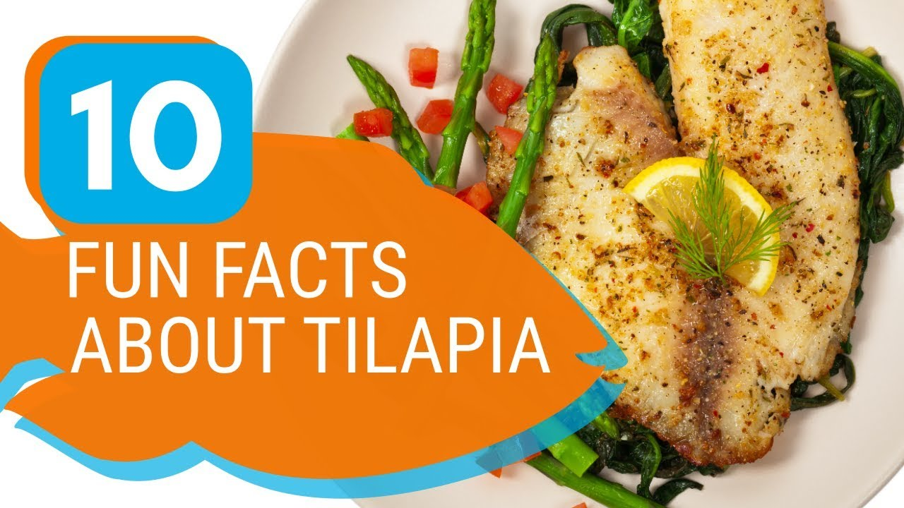26 Interesting Tilapia Facts and Trivia