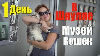 Литва, Шяуляй за 1 день. Музей Кошек дарит любовь и радость! Siauliai Cats Museum.