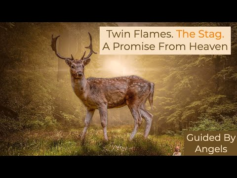 Twin Flames 🌈The Stag 🌷 A promise From Heaven