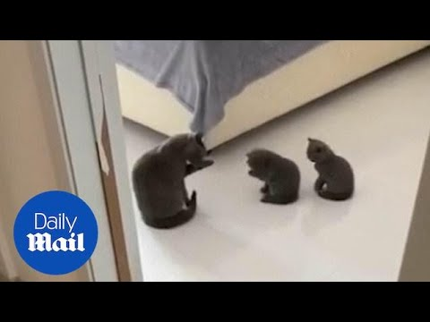 Adorable Kittens Mimic Their Mother As They Wash Their Faces