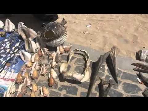 Cape Verde   Shark Finning