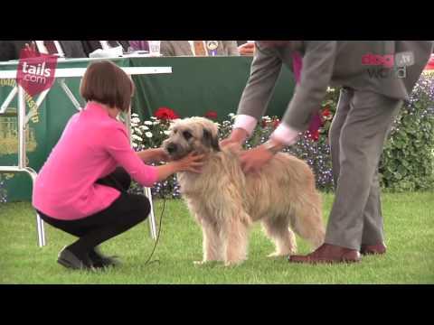Windsor Dog Show 2016 - Pastoral group
