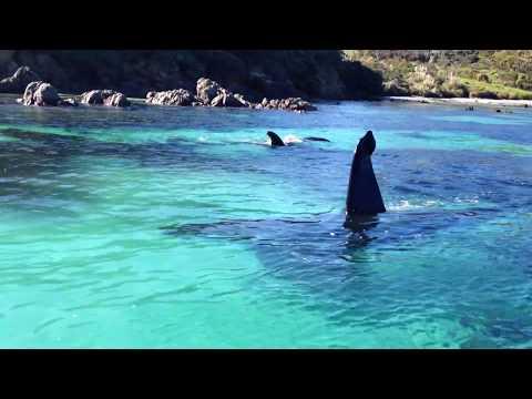 Beautiful Orcas in New Zealand
