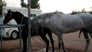 Repeat youtube video caballo el diamante