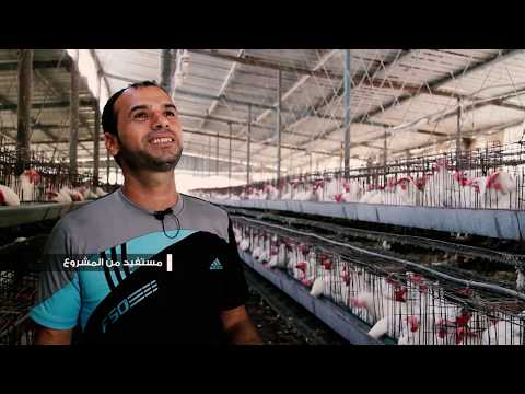 Installation of solar energy for poultry farms in Gaza Strip