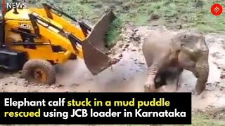 Elephant calf stuck in a mud puddle rescued using JCB loader in Karnataka