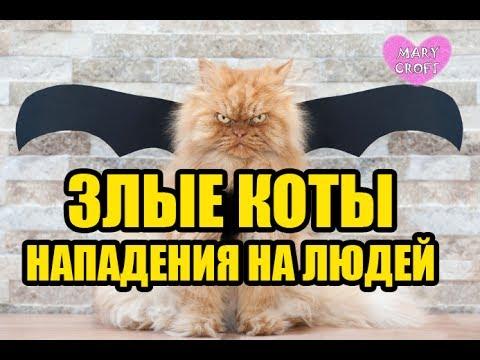 ЗЛЫЕ КОТЫ / Кот напал на человека / ЗЛОЙ КОТ