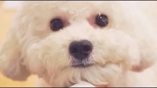 Singer : Kensi Title : Yeah!めっちゃホリディ everysing, Let's Sing!...