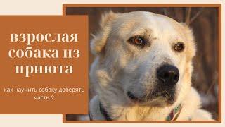 Взрослая собака из приюта | Часть 2 – Как научить собаку доверять