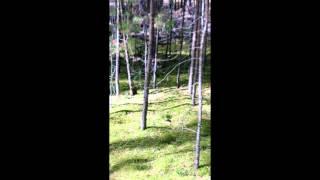 12. Птицы и животные - Белка нашла белый гриб.(Птицы и животные - Белка нашла белый гриб. Случай произошел 03 октября 2015 года в лесу под Тюменью. Я увидел..., 2015-10-07T11:23:20.000Z)