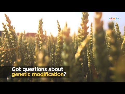 GM crops: to ban or not to ban? That's not the question