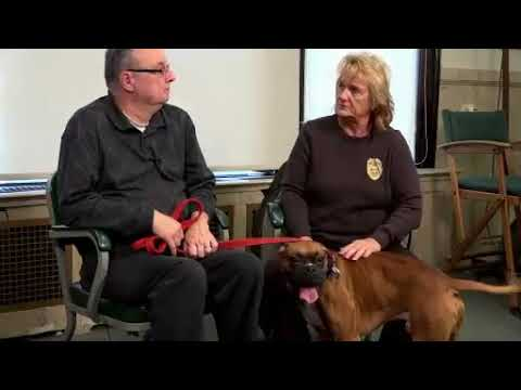 Erie County Dog Warden Barb Knapp features Titus, a boxer available for  adoption at the dog pound in