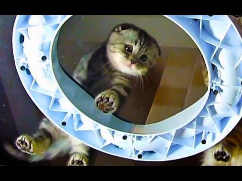 Under paws and bellys | Funny Cats Video