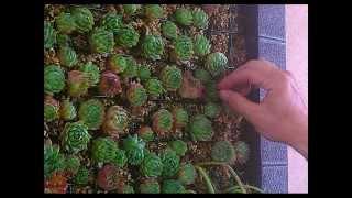 Tutorial cuadro vivo jardin vertical viyoutube for Jardin vertical sodimac