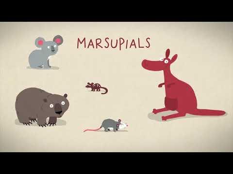 Вопрос: Какие два вида млекопитающих откладывают яйца?